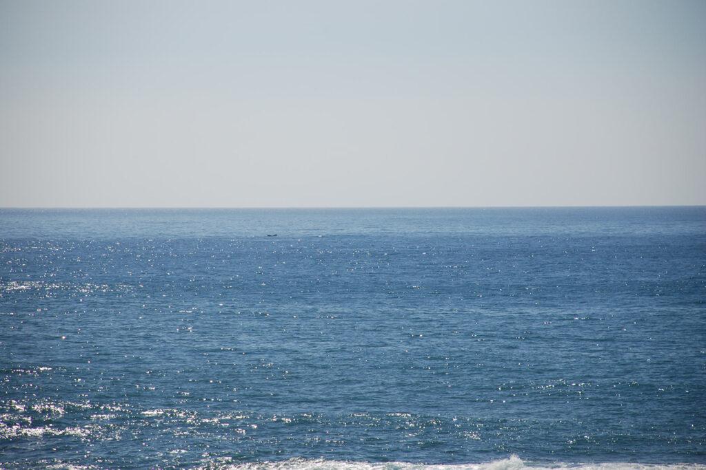中央やや左にザトウクジラの尾が少し見えています